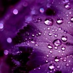 iPad Retina HD Wallpaper Purple Leaves