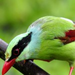 iPad Retina HD Wallpaper Green Magpie